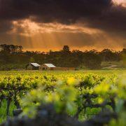 St Hugos barossa winery
