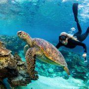 TravMedia Australia 1474057 Jeremey Somerville BH1 Snorkeller Turtle Jeremy Somerville
