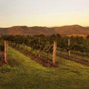 Scarborough Wine, Gillards Road. Image courtesy Chris Elfes and Destination NSW